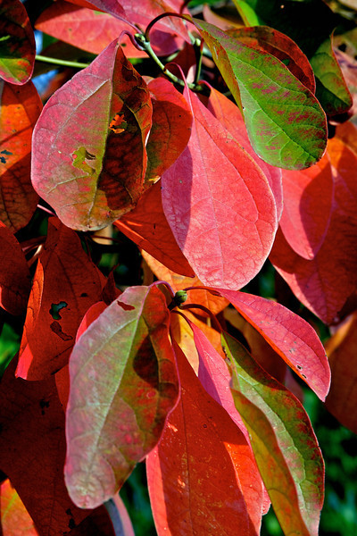 Fall color 2010