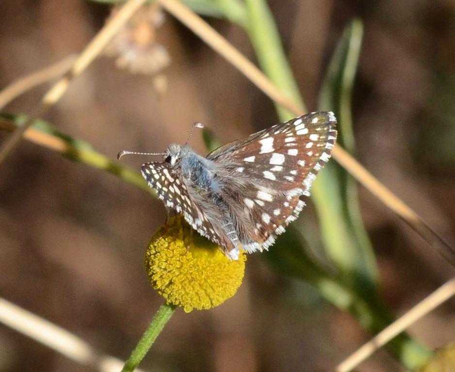 blue butterfly_DSC_1165
