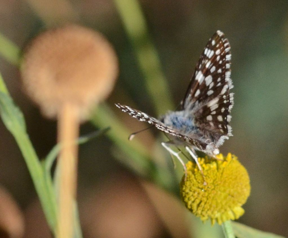 blue butterfly_blue on back_DSC_1158