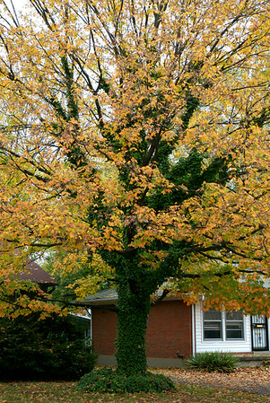 Fall leaves 2006