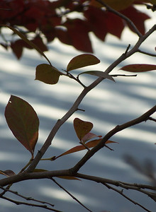 branch on water