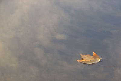 leaf floating on mist