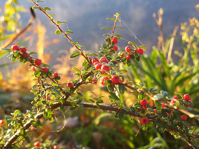 light on berries