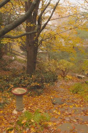 Fall Garden Time Exposures