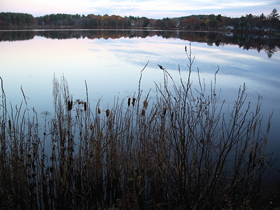 reeds at water's edge