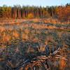 Kyiv, Ukraine - forest near Irpen in fall - sunset blaze