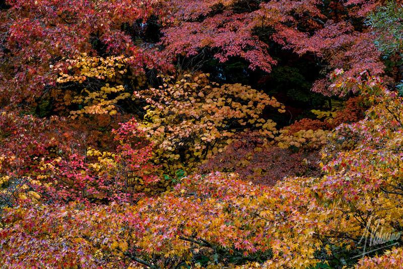 Seattle Arboretum color
