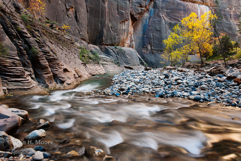 Shallow rapids at a bend in the river at the peak of fall.  Virgin River Narrows in Zion National Park.