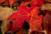 Fall-DSC_6254