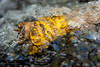 A yellow leaf stuck on a stick along some rapids in McGee Creek.  Eastern Sierra, California, USA.