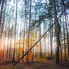 Kyiv, Ukraine - forest near Irpen in fall - sunset stockade