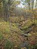 Nerstrand  big woods