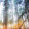 Kyiv, Ukraine - forest near Irpen in fall - evergreen in fall