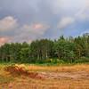 field and trees at sunset near Zmina camp, Kyiv -