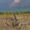 scraggly stump in field near Zmina camp, Kyiv - struggle of earth and sky
