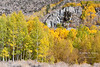 Grove of aspens in different stages of color around a waterfall on the South Fork of Bishop Creek.  California, USA.
