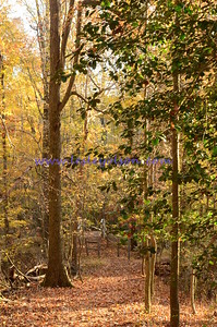 Perimeter trail in Greenbelt Park, MD