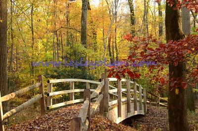 Perimeter Trail Bridge in Greenbelt Park, MD