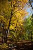 Mid October @ the Minnesota Landscape Arboretum - 2015