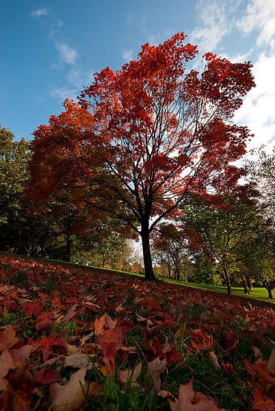 Fall-DSC_6247