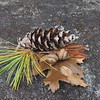 pine cone acorns leaves