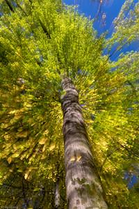 Fallendes Blattwerk / Falling Leaves