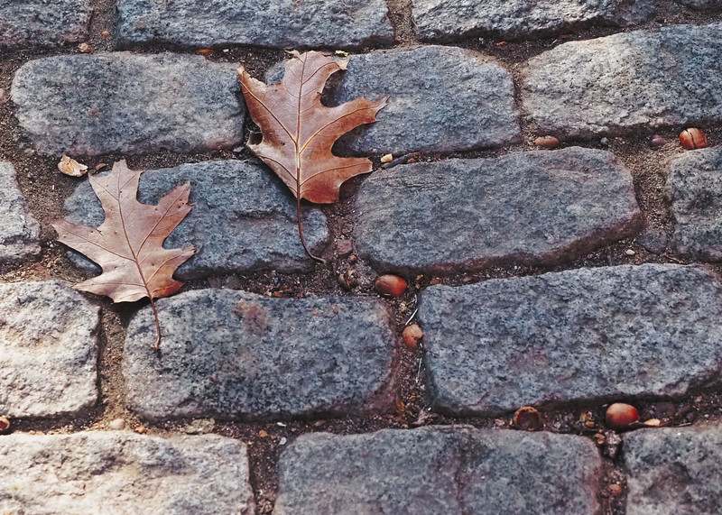 bricks leaves