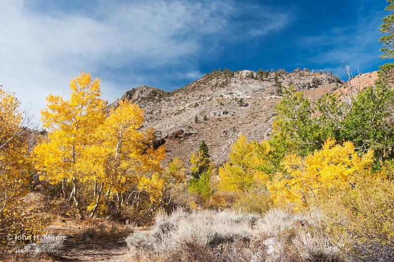 Fall color in the Eastern Sierra.  Near Aspendell, California, USA.
