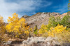 Fall color in the Eastern Sierra.  Near Aspendell, California, USA.