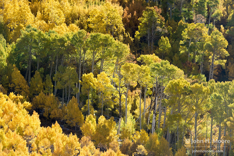 Autumn color along the South Fork of Bishop Creek.  Eastern Sierra, California, USA