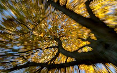 Der Herbst fällt von der Leiter... / Fall off the ladder...