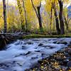 A small creek in fall