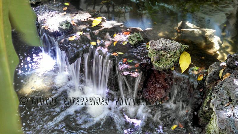 Leafy falls