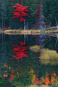 BSP-TC scenic reflection2printed4x6