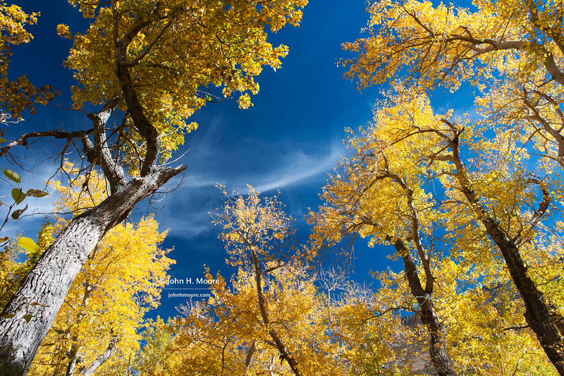 Fall color in the Eastern Sierra.  McGee Creek, California, USA.
