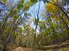 Nerstrand Big Woods state park, Oct. '15