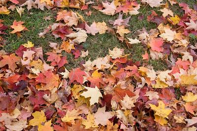Fall2009_Albany
