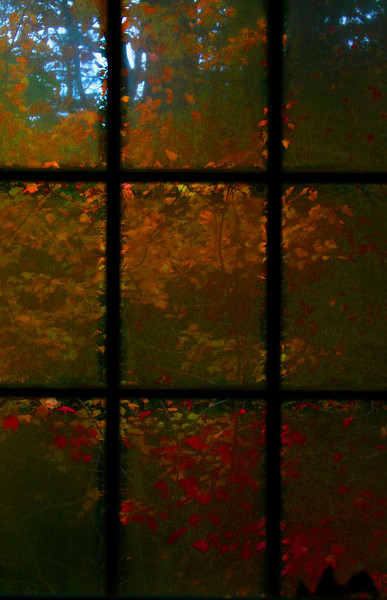Fall colors in the back yard through a fogged-up bathroom window.