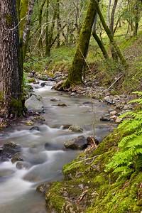 Cascade Creek, Marin