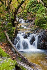 Swanson Creek, Uvas Canyon