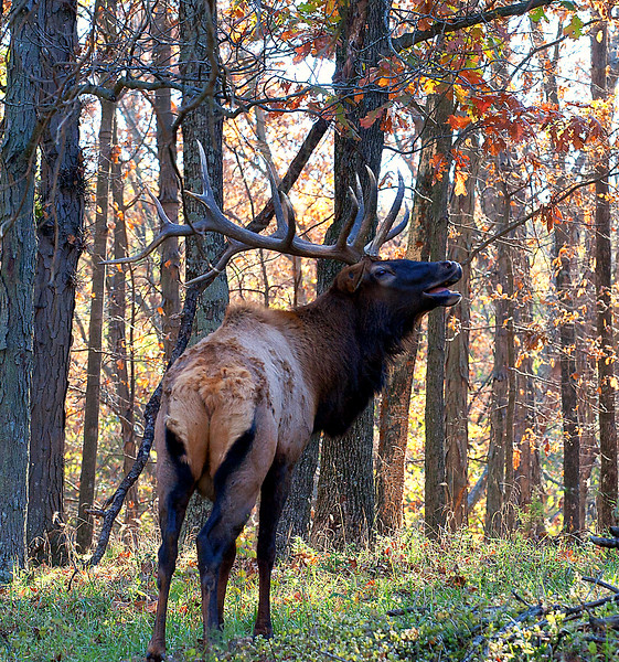 Lone Elk Park, St. Louis, Missouri, October 2011