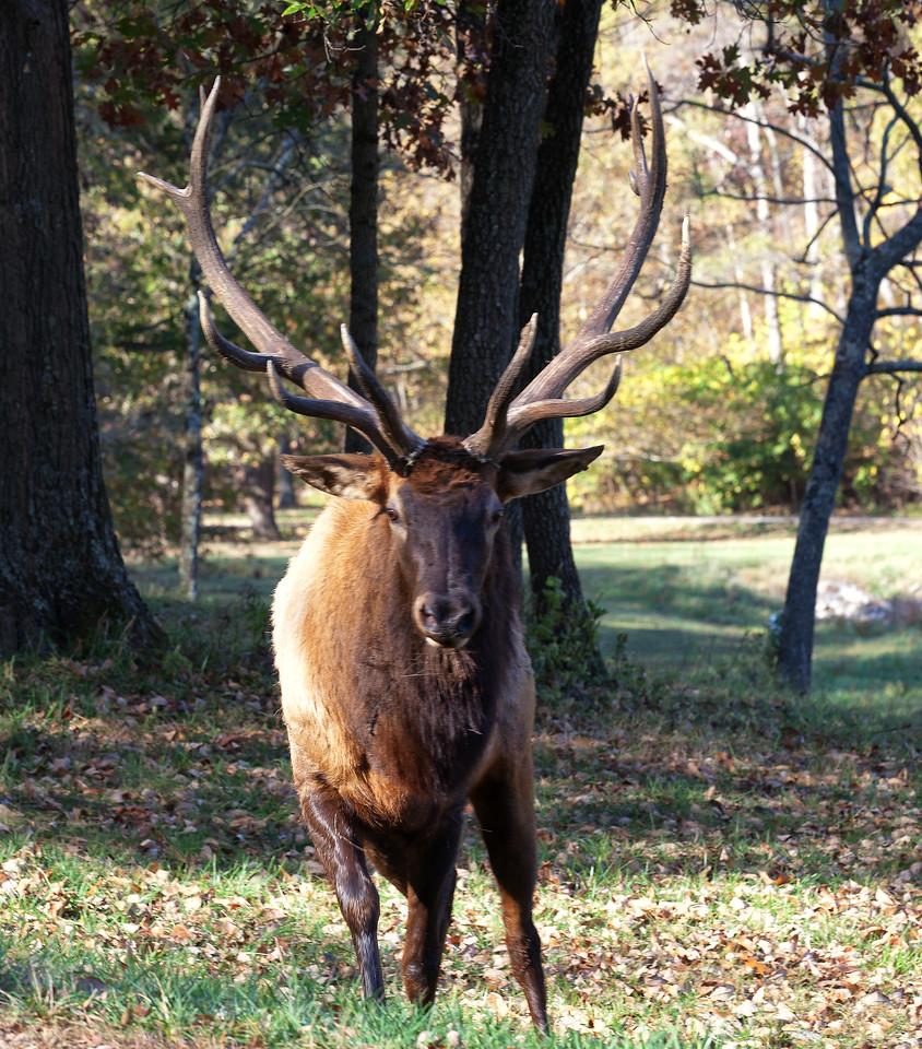 Lone Elk Park, St. Louis, Missouri, October 2011