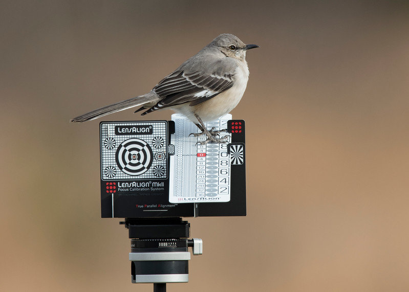 Mockingbird helping me with calibrating my new camera that I got for Christmas