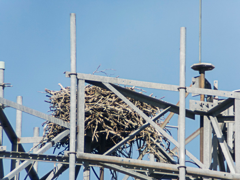 Nest on cell tower photographed from my front door