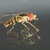 Fly on double pane glass