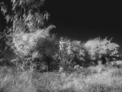 Infrared(Farm)