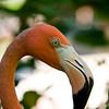 Miserly flamingo