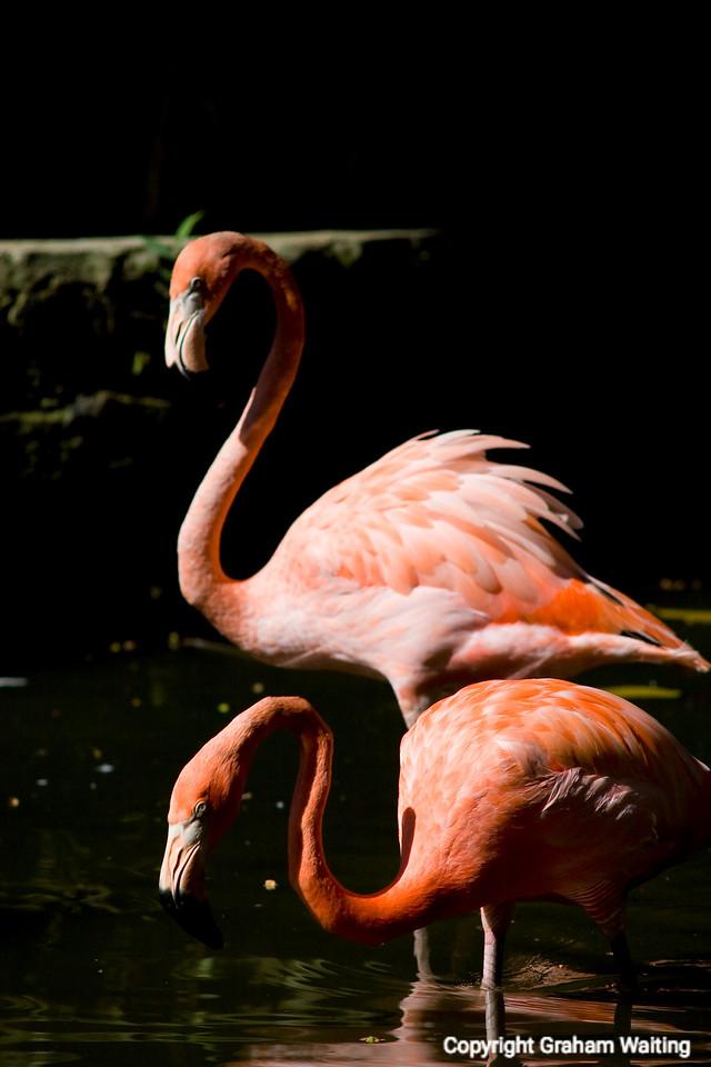 Yes men, flamingos