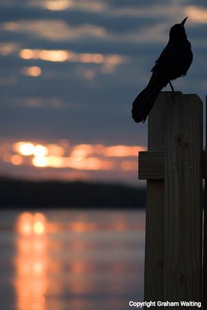 Bird against sunrise background