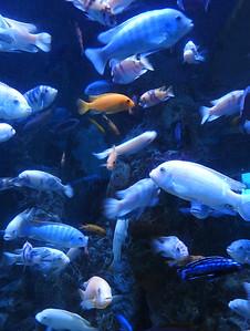 Kemah - Full Aquarium